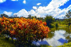 Bush and small pond. Royalty Free Stock Photography