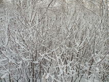 Bush in snow. Suitable as background, winter Stock Photos