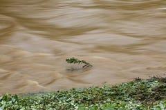 Bush som slåss flödet Arkivfoto