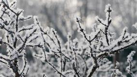 Bush som täckas med rimfrost lager videofilmer