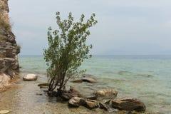 Bush som växer i den tidvattens- zonen på en strand Royaltyfri Bild