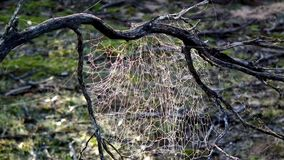 Bush Spiders web in Mallee Background Stock Images