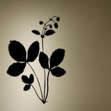 Bush of the strawberry. Silhouette of the bush of the strawberry Stock Photography