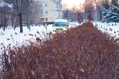 Bush on the street in winter Stock Images