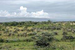 Bush with stunted trees in savannah at reserve Masai Mara Royalty Free Stock Photography