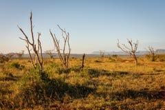 In Bush sudafricano fotografia stock libera da diritti