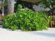 Bush sur la plage Image stock
