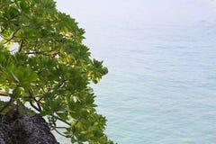 Bush sur la roche accrochant au-dessus de la mer Image stock