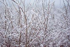 Bush täckte med den första snön Fotografering för Bildbyråer