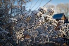 Bush täckte med frostig morgon för hoar arkivbilder