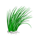 Bush of tall green grass. Isolated on white background. vector illustration Royalty Free Stock Images