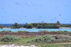 Bush tangentfåglar Arkivbild