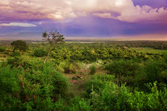 Bush in Tanzania, Africa landscape. Bush in Tanzania, Africa. Sunset landscape royalty free stock photo