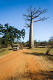 Bush taxi and baobab Royalty Free Stock Photo