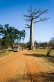 Bush taxi and baobab Royalty Free Stock Photo