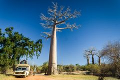 Bush taxi and baobab Stock Photos