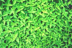 Bush texture. Can be used as background Stock Photography