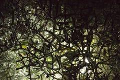Bush texturer Royaltyfria Foton