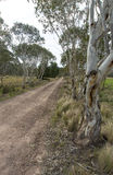 Bush Track Australia Royalty Free Stock Photography