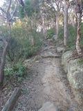 Bush track. Nature bush trail path walk royalty free stock image