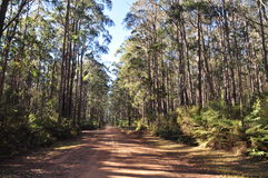Bush track though native eucalypt forest. This bush track though a native eucalypt forest is in a national park. In this case the fairly clay rich soil of this Royalty Free Stock Image