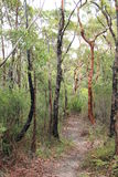 Bush Trail. Trail through the forest after a bushfire royalty free stock images