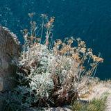 Bush trawa na skłonie skały Zdjęcie Royalty Free