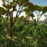 Bush trees in Australia 3d rendering Stock Image