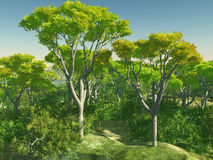 Bush trees in Australia 3d rendering Stock Photo