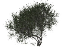 Bush or treetop. 3D illustration of thick bush, shrub or treetop on white background stock images