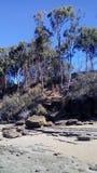Bush trifft den Sand und den Stein Stockfotos