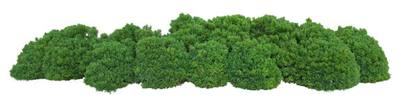 Bush. Trimmed into round shape Royalty Free Stock Photography