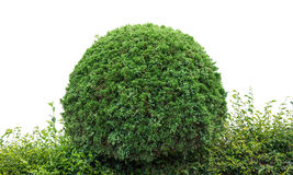Bush. Trimmed into round shape Royalty Free Stock Images