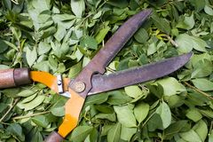 Bush Trimmers Royalty Free Stock Photos