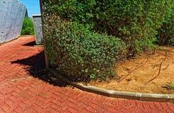 Bush in un giardino pubblico con i tubi di innaffiatura fotografia stock libera da diritti