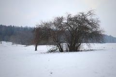Bush in un paesaggio di inverno con le orme fotografia stock libera da diritti