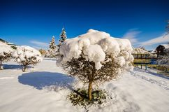 A bush under a cap of white snow and a blue sky in winter Stock Image