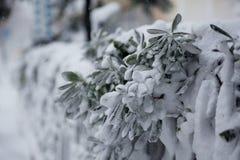Bush under snön arkivbilder