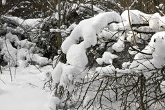 Bush under the snow Royalty Free Stock Photos