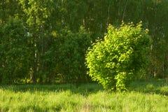 Free Bush Under Sunlight Royalty Free Stock Image - 13892566