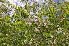 Bloem op acaciastruik stock foto afbeelding bestaande uit schoonheid 9801544 - Bush architectuur ...