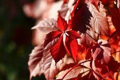 Bush van de bladeren royalty-vrije stock foto