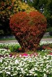 Bush vermelho Fotos de Stock