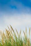 Bush, vertical landscape green and blue sky Stock Images