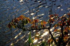 Bush vid vattnet Royaltyfria Bilder