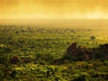Bush w Kenja, Afryka. Tsavo Zachodni park narodowy Zdjęcie Stock