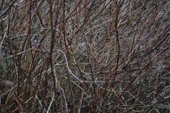 Bush w lesie Zdjęcia Royalty Free