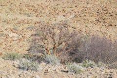 Bush w Namibia Zdjęcie Stock