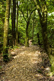 Bush Walk - New Zealand Stock Photography
