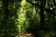 Bush Walk - New Zealand Royalty Free Stock Image